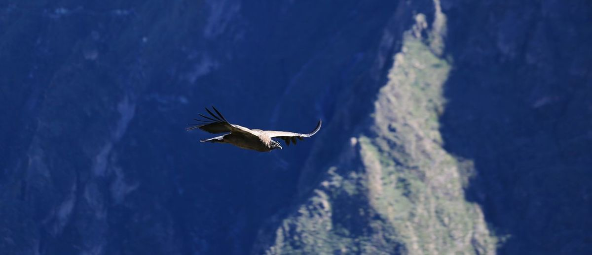 view of eagle flying against mountain