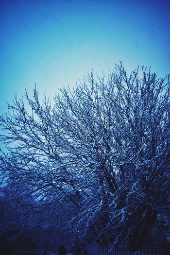 Photowalktheworld EyeEm Selects Surreal Nature Nature Photography Nikon Tree Snow Bird Clear Sky Blue Flock Of Birds Silhouette Sky