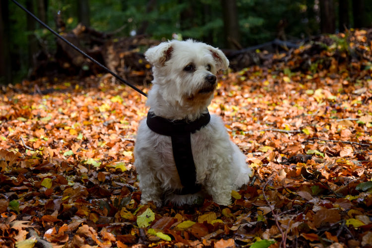 Portrait of a dog on dry leaves during autumn