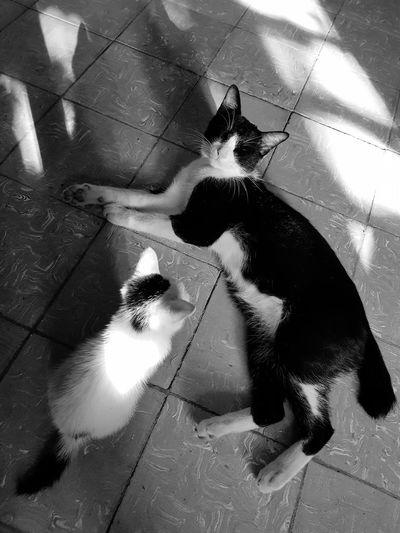cats Lazy Cat