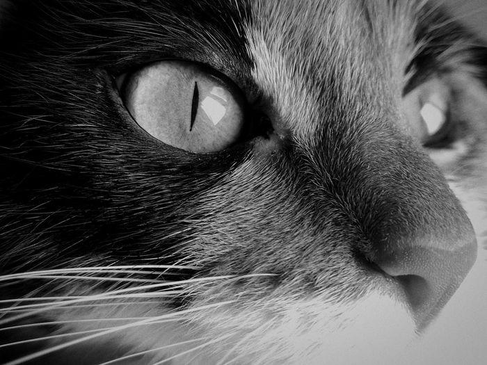 Cat Pets Animal Themes Cat крастота Animal Looking Away Animal Eye One Animal