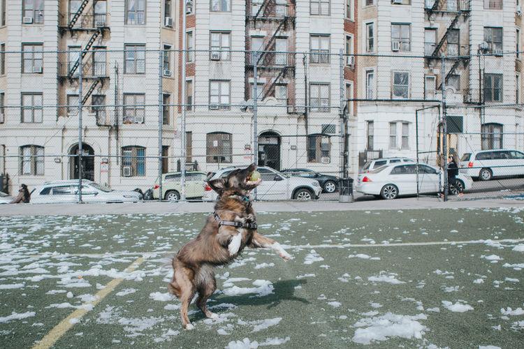 Catch Jump Activity Building Exterior Fetch Friend Good Times Mammal Outdoors Snow