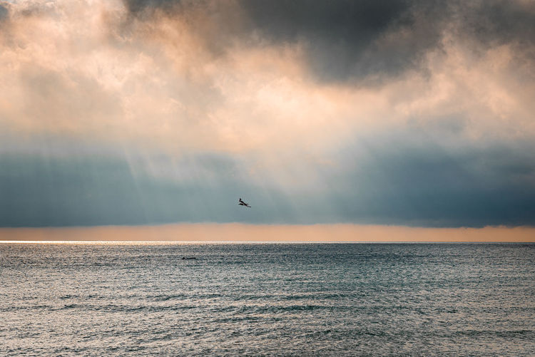 Sky Sea Cloud - Sky Animal Themes Horizon Over Water Beauty In Nature Water Horizon Scenics - Nature Bird Waterfront Animal Wildlife One Animal Sunset Tranquil Scene Flying No People Dusk Dawn Clouds Clouds And Sky Heaven Heavenly