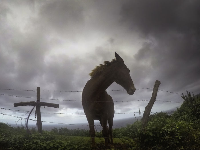 Pet Portraits Animal Themes Beauty In Nature Cloud - Sky Day Domestic Animals Field Full Length Grass Horse Livestock Mammal Nature No People One Animal Outdoors Sky Standing Tree