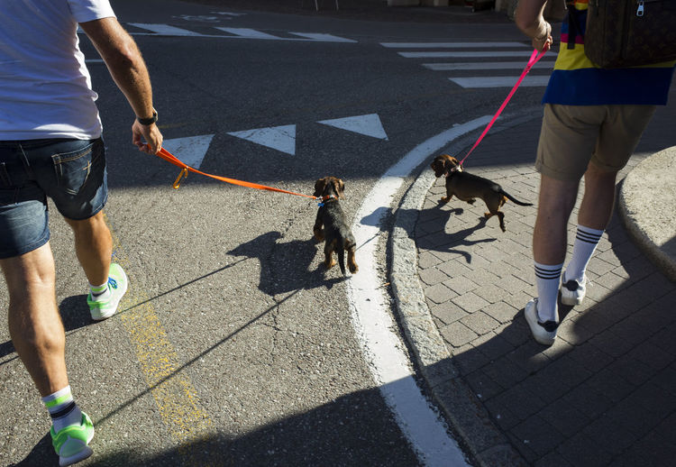Low section of pet owners walking with dogs on street