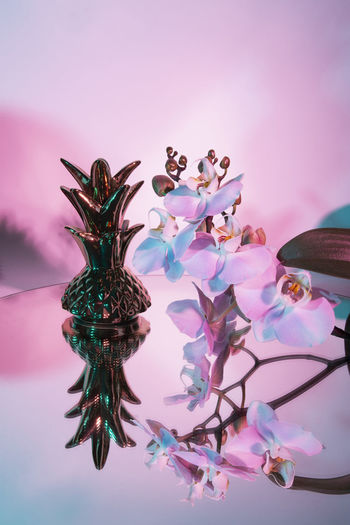 Pastel your life Flower Flowering Plant Plant Pink Color Indoors  No People Nature Beauty In Nature Colored Background Close-up Freshness Reflection Pink Background Fragility Decoration Table Growth Art And Craft Studio Shot Water Purple Digital Composite Luxury Pineapple EyeEm Best Shots