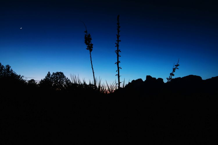 Sunset Yucca Plant Silhouette Nature Sky Outdoors Beauty In Nature No People Sunset Blue Night Dusk Darkness After Dark Southwest  Good Nite Fine Art Travel Desert Landscape Landscapes