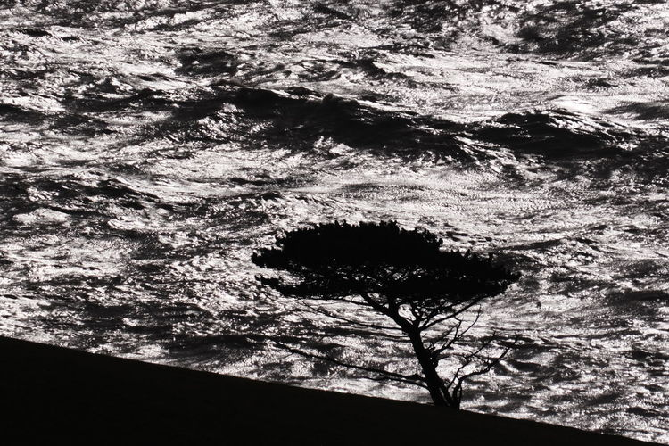 Full frame shot of tree branches