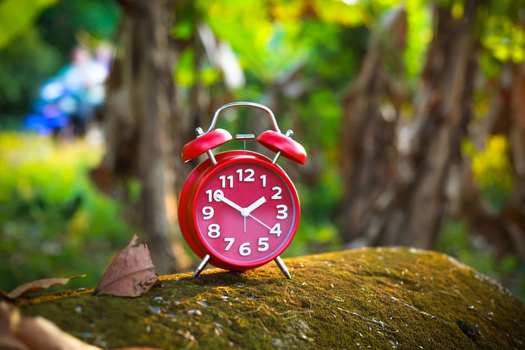 Red Alarm Clock Clock Time Alarm Clock Number Tree Clock Face Plant Focus On Foreground Red Close-up No People Outdoors Nature Plant Part Leaf Accuracy Instrument Of Time Single Object Clock Hand Minute Hand Hour Hand Surface Level
