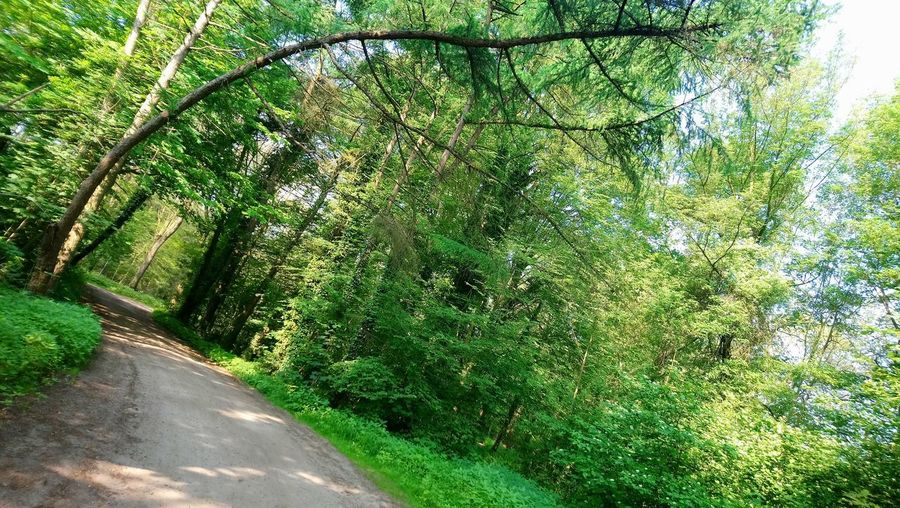 Be different. Tree Road Grass Green Color Empty Road Green Woods