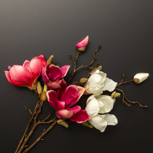Close-up of pink flowers on table against black background
