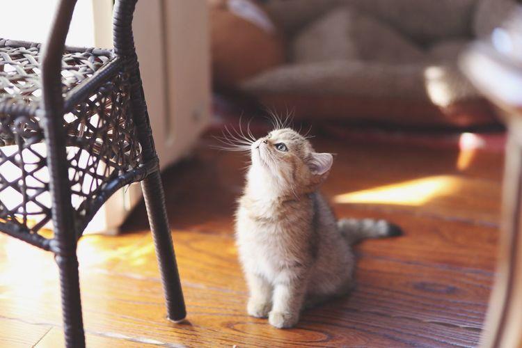 Cat on hardwood floor at home