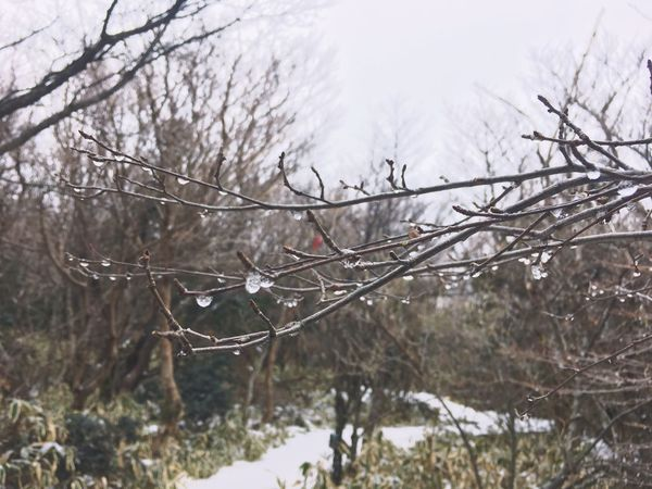 Jeju 제주도 제주 한라산  Korea Winter Cold Temperature Snow Bare Tree Nature Weather Branch 10