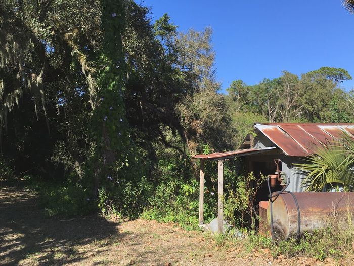 EyeEmNewHere Tree No People Outdoors Built Structure Sunlight Clear Sky Quiet Places Historic Abandoned Florida Rural Rural Scene Rural America Rusty Rusty Metal Rustic Florida Unknown Florida Photography