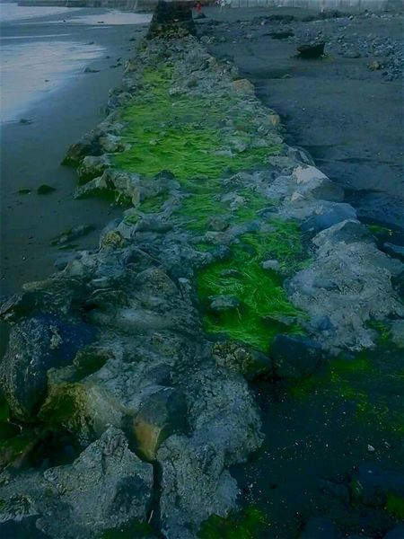 Naturesway Green Algae Beach Shoreline