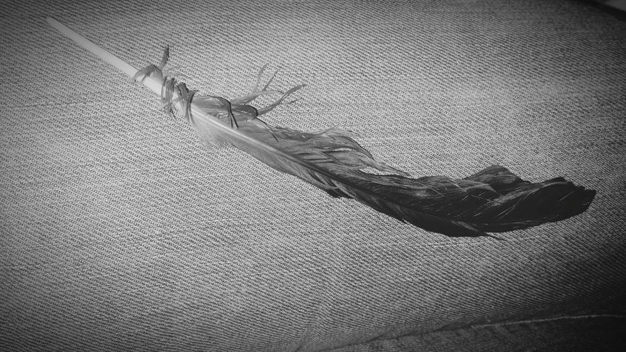 Philadelphia Pennsylvania Feather  My Quirky Style My View Feather From Out Of Nowhere Blackandwhite Photography Philadelphia City Of Brotherly Love Freebird Unexplainable Objects On My Car Seat