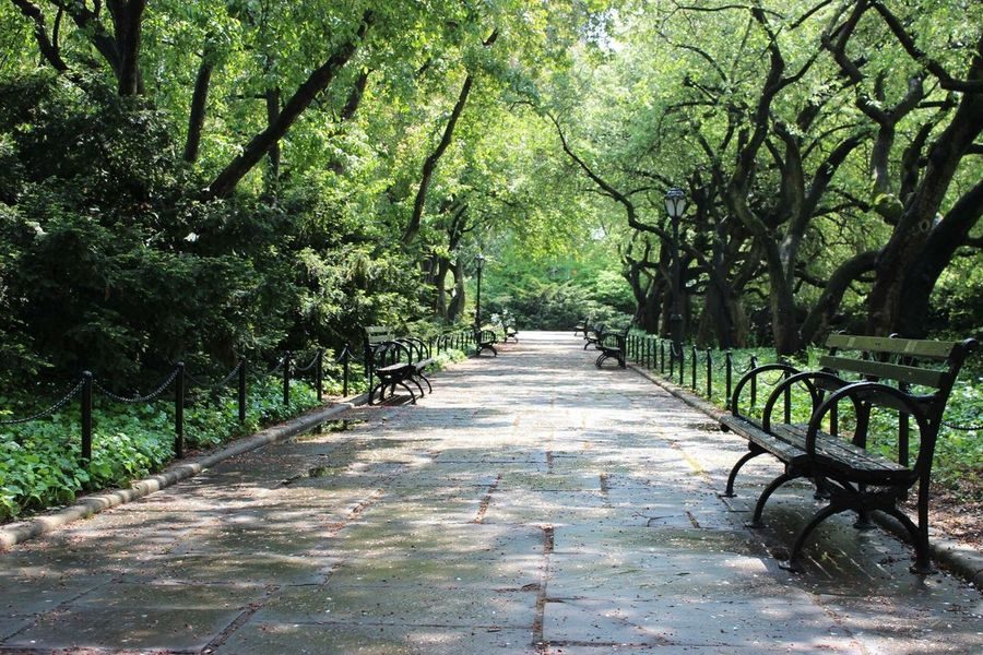 Silent Quiet Alone Benches Central Park New York Park Photographer Photography Canon600D Taking Photos Greenery Nofilter The Great Outdoors - 2017 EyeEm Awards