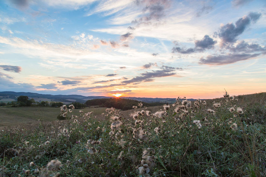 Field Fieldscape France Animal Themes Beauty In Nature Cloud - Sky Day Domestic Animals Field Fields Grass Landscape Mammal Nature No People Outdoors Scenics Sky Sun Sunset Tranquil Scene Tranquility