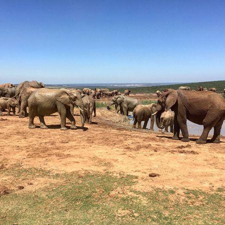 Addo at its best! Check This Out Hello World Elephant Nationalpark Addoelephantpark Wildlife Wildlife & Nature