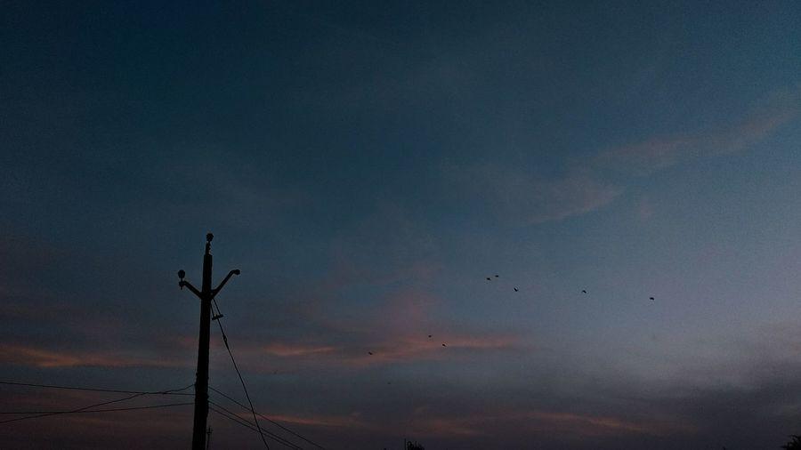 EyeEm Selects Bird Sunset Silhouette Blue Sky Landscape