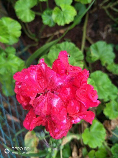 雨后的花是最有活力的