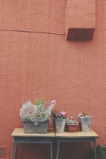 Potted Plants On Table Against Wall