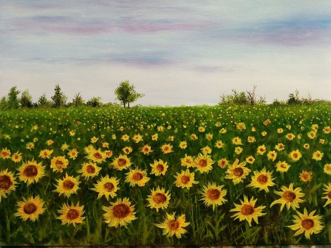 "Sunflower field ,oil on canvas 14""_20"". Sunflower Field Flower Beauty In Nature Tranquility Plant Scenics Blossom Nature Art, Drawing, Creativity Fine Art Drawing Oil Painting Cretiveart My Art Colllection Beauty Friendship. ♡   Love ♥ Koi."