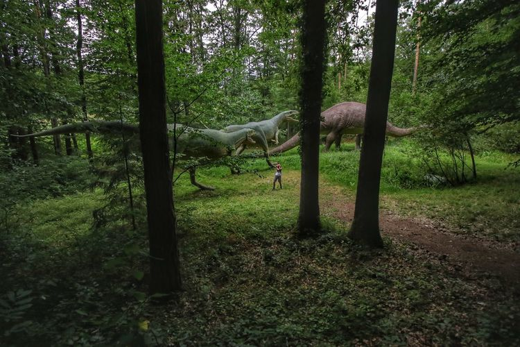 Lost In The Landscape with the dinosaurs Tree Nature Green Color Animal Themes Outdoors Dino's Photography Beauty In Nature Forest Park Fun Time Travel Time Traveler Visual Creativity