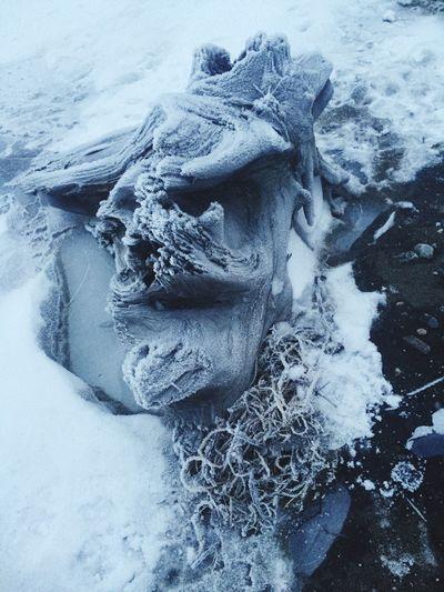 Alaska Winter Outdoors Ice Snow Beach Driftwood