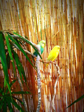 Parrots Love Together Itwasagoodday Cheers