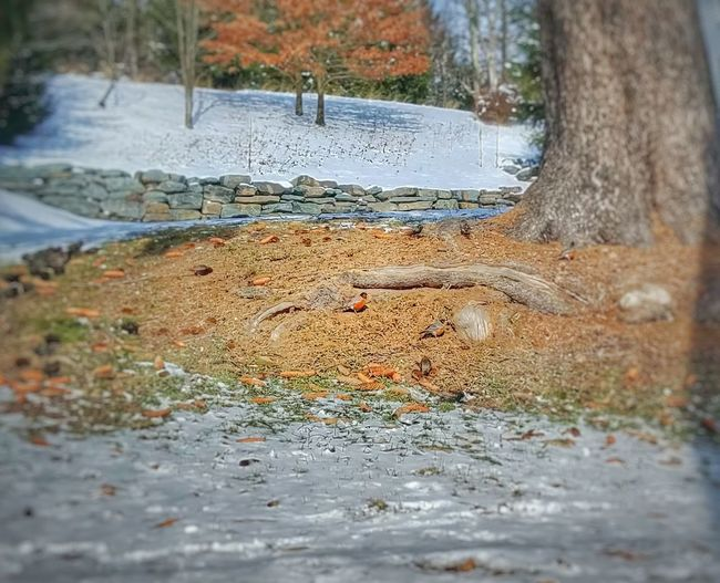 This poor Robin and his friends are in for a big shock. 1-2 ft of snow expected in the next 3 days. March weather in the Northeast is so unpredictable. Water Nature Reflection Tree Day No People Outdoors Close-up Autumn Beauty In Nature