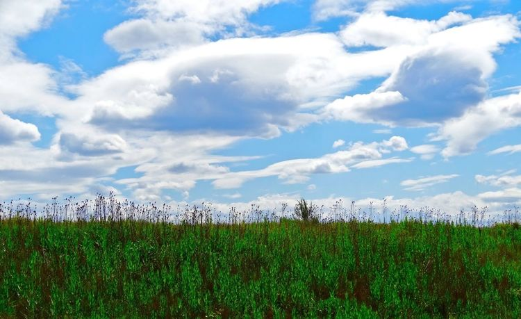 Enjoying Nature Nature_collection Sun_collection, Sky_collection, Cloudporn, Skyporn EyeEm Nature Lover