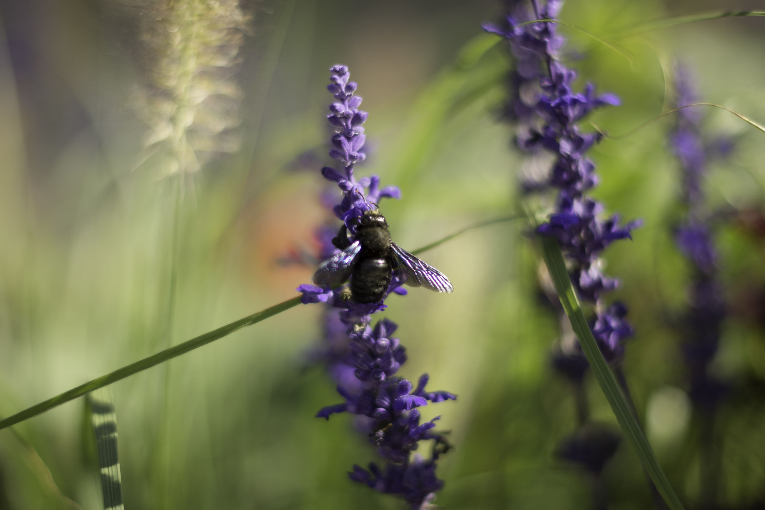 nature, flower, fragility, beauty in nature, growth, plant, freshness, purple, insect, animal themes, one animal, no people, close-up, animals in the wild, outdoors, day, pollination, flower head