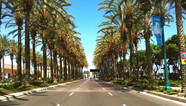Katella Avenue in Anaheim is a heavily populated and active street in the resort city, with Disneyland and other Disney attractions just a couple blocks to the west.....here, facing to the east, the street is heavily lined in Symmetry with Palm Trees . Perspective Treelined Street TreePorn Street Photography Streetphotography Perspectiveporn One Point Perspective Orangecounty