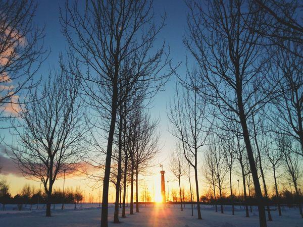 Landscape Winter Sunset Russia Saint-p
