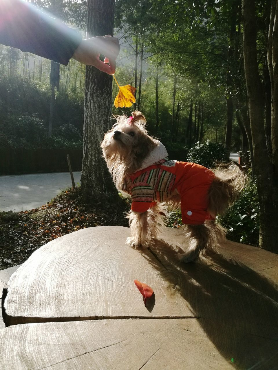 dog, pets, animal themes, one animal, domestic animals, tree, mammal, day, outdoors, full length, real people, water, motion, one person, nature, people