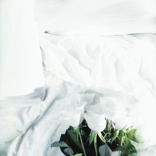 white roses First Eyeem Photo