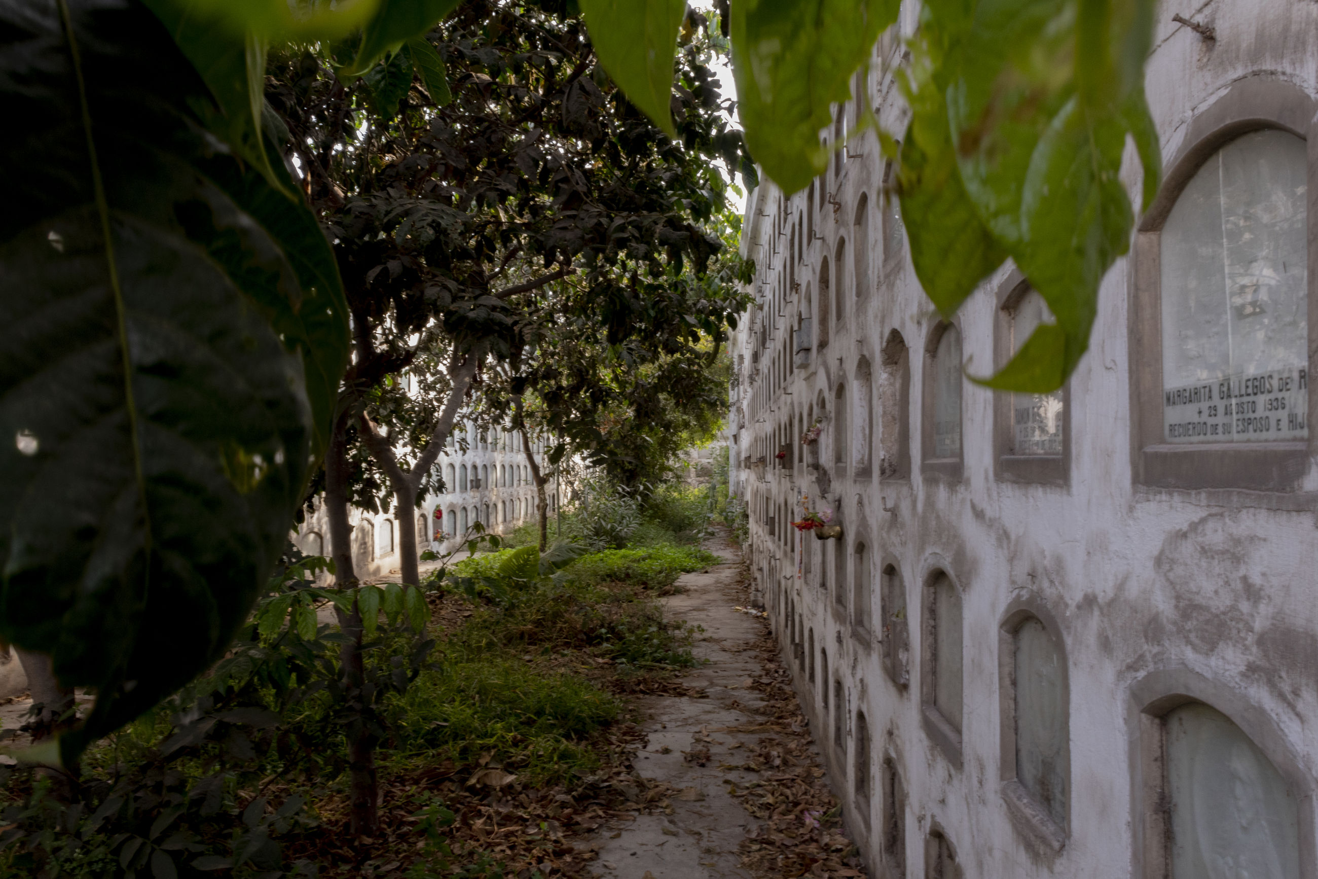 plant, architecture, tree, nature, no people, built structure, day, building exterior, green color, growth, outdoors, the way forward, building, leaf, transportation, city, direction, road, plant part, focus on foreground