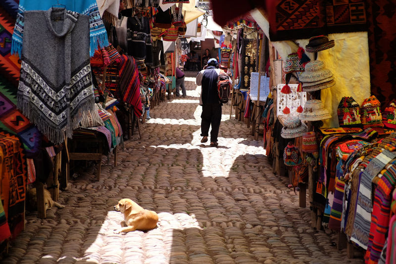 a local market in Peru. Animal Dog Market Multi Colored Outdoors People Quechua South America Streetphotography