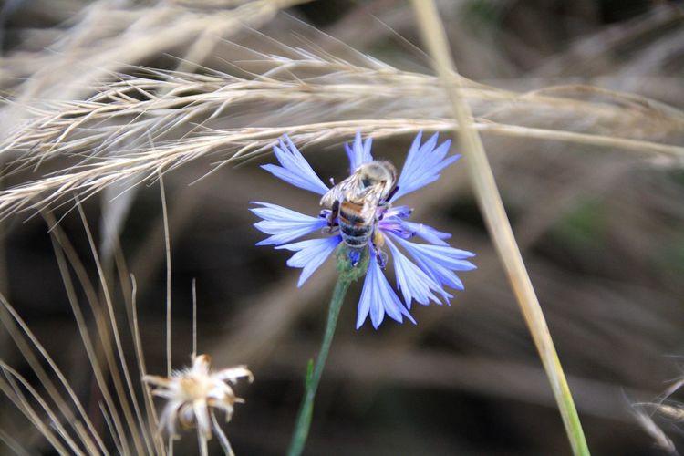 Close-up of honey bee on purple flowering plant