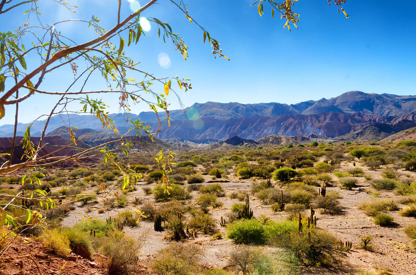 Dramatic desert landscape near Tupiza, Bolivia Andean Andes Bolivia Canyon Color Day Desert Formations Growth High Hills Landscape Mountain Mountain Range Nature Outdoors Path Plant Red Rock Scenics Travel Destinations Tree TUPIZA Valley