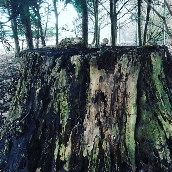 Tree Plant Tree Trunk Trunk Day No People Growth Nature Forest Outdoors Built Structure Land Low Angle View Architecture Branch Tranquility Sky WoodLand Wood - Material Textured
