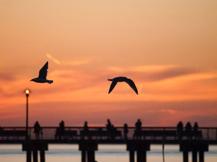 From Coney Island with love Travel Destinations Travel Finesteye New York Seagull Summer Beach Sunset Sky Silhouette Water Vertebrate Orange Color Bird Animals In The Wild Architecture Animal Themes Beauty In Nature Animal Nature Scenics - Nature Flying Animal Wildlife Bridge Sea