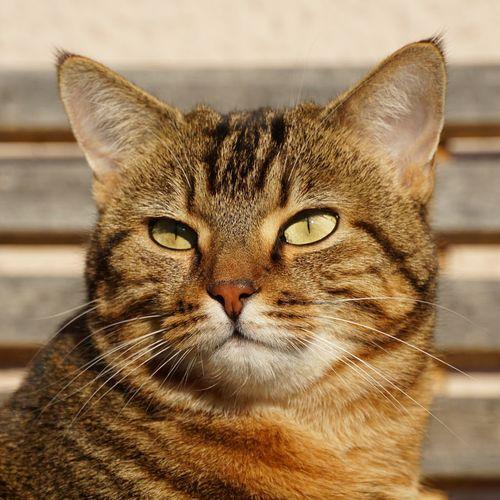 Arwen Cat Animal Themes One Animal Animal Feline Mammal Pets
