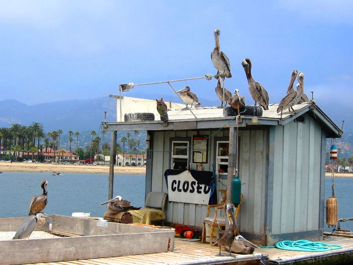 Group of Pelicans and Sea Birds Relaxation Around Bait Shop with California Coastline in Background California Coastline Fun Relaxing Sea Birds Vista Animal Themes Animal Wildlife Animals In The Wild Bait Shop Bird Crowd Day Group Of Sea Birds Nature No People Outdoors Pelican Perching Sky