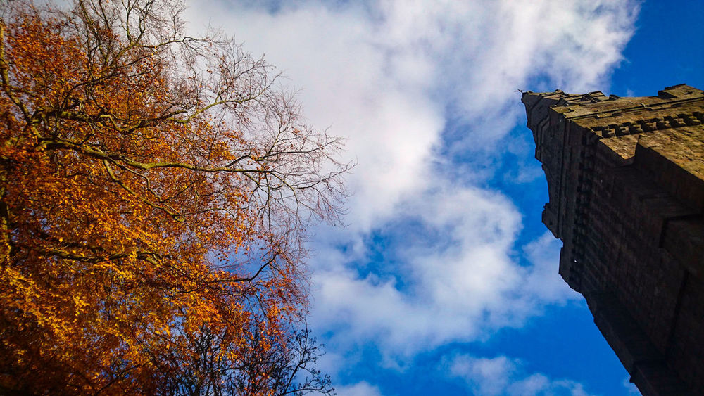 Low Angle View Cloud - Sky Built Structure No People Sky Building Exterior Architecture Day Colors Photography Photo Tree Autumn Colours Autumn Looking Up Look Up Tower Cathedral Tower Seaton Park No Idea