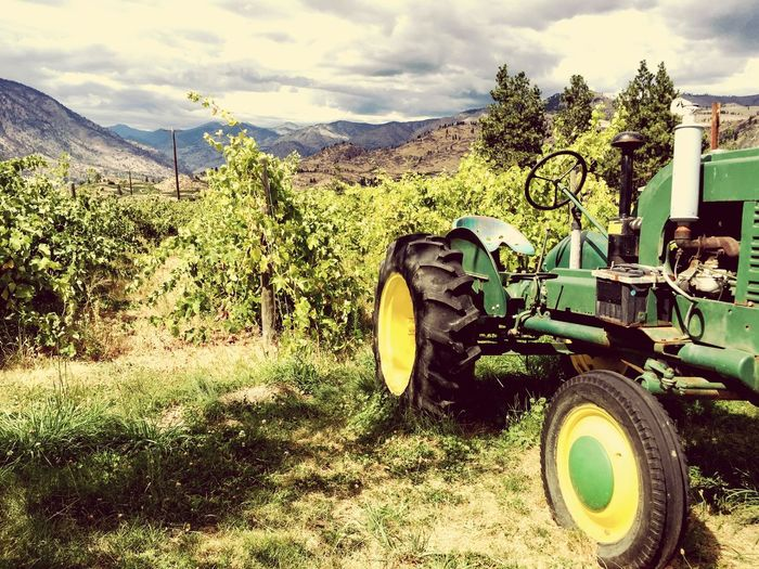 Vineyard Grapes Wine Old Tractor Green Tractor Grape Vines Four Lakes Winery Washington Wine Country Landscape Winery