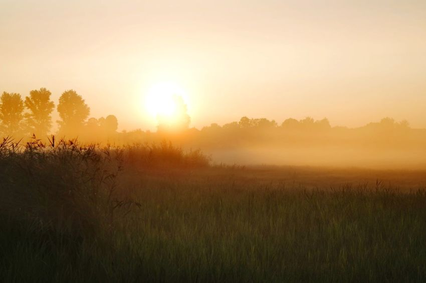 Im Zwielicht Nature Photography Beauty In Nature Reinheimer Teich Foggy Morning My Place To Relax My Point Of View Gold Colored Tree Dawn Beauty Multi Colored Rural Scene Fog Sunlight Summer Springtime Atmospheric Mood Dramatic Sky Lightning Romantic Sky Forked Lightning Foggy Moody Sky