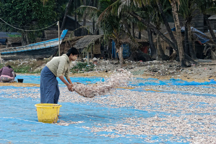 Drying the sardines Fishing Village Rakhine State Adult Beach Day Lifestyles Myanmar Nature One Person Outdoors People Real People Standing Tree Working