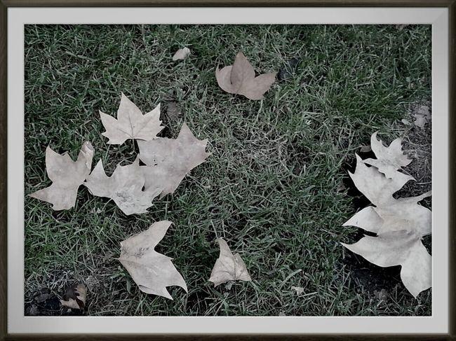 Tardor/Autumn